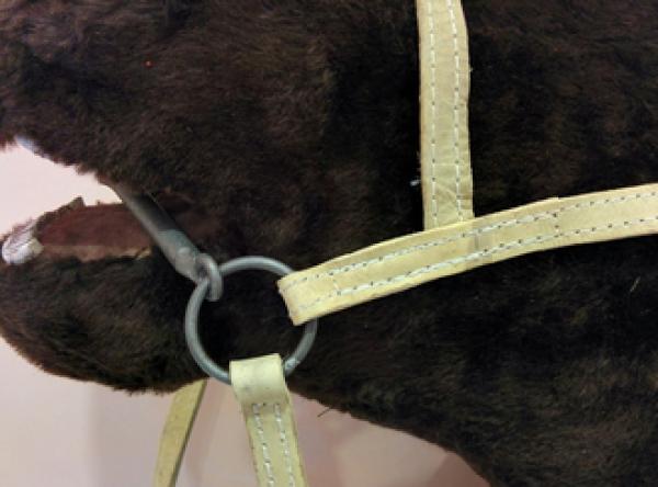 Узда для лошади из сыромятной кожи купить в интернет магазине конной амуниции