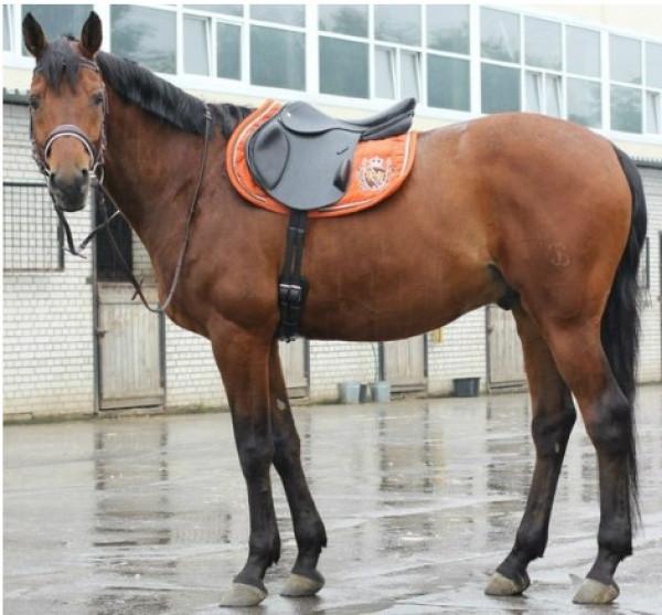 Седло Премиум Моно купить в интернет магазине конной амуниции